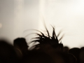 amphi_festival_2012_im_tanzbrunnen_koeln_133_20120806_1104821157